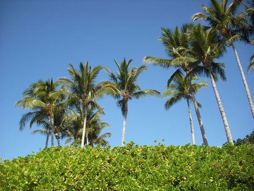 Maui & Lanai