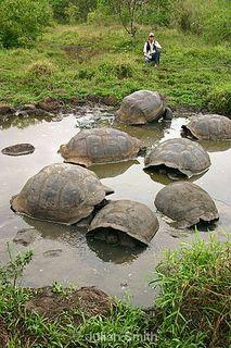 Galapagos_137_std