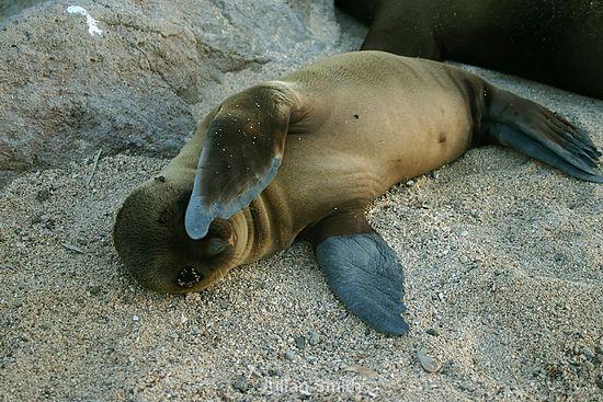Galapagos_006_std